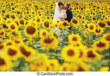 Groom hugs bride from behind standing on the field covered with sunflowers