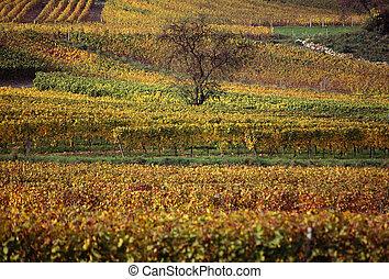 Vineyards landscape in Savoy, France - Vineyards landscape,...