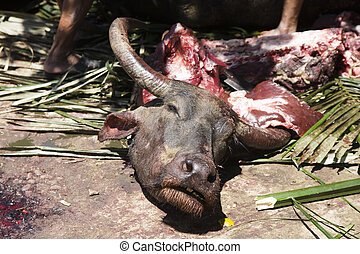 Slaughtering a water buffalo during a death fest in the...