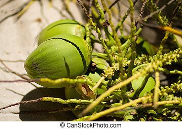 Coconuts - Closeup of green coconut brunch