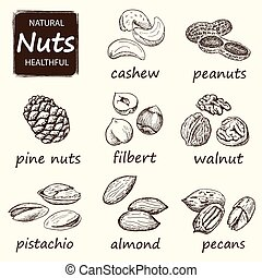 Nuts set. Hand drawn vintage illustration. Natural and...