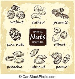 set of sketches of nuts