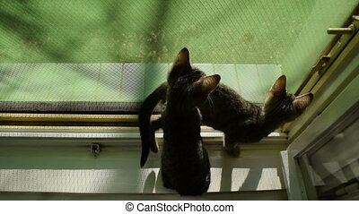 kittens explore the world through an open window