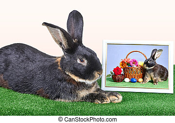Rabbit is lying next to a photograph in a frame with a...
