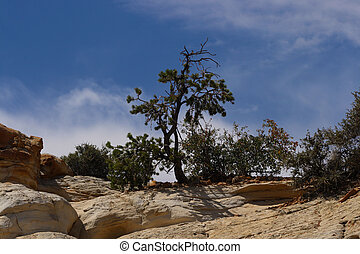 Desert tree - A tree growing on a desert mountain.