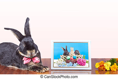 The rabbit with a bow at the neck lies next to a photograph...