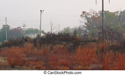 morning fog on railway station the countryside