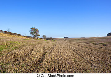 straw stubble and hedgerow - extensive straw stubble fields...