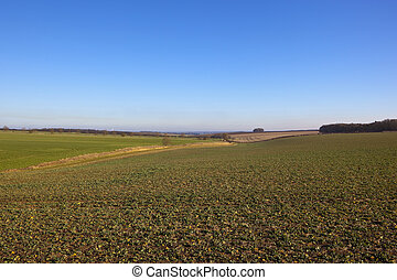yorkshire wolds agriculture - undulating countryside with...