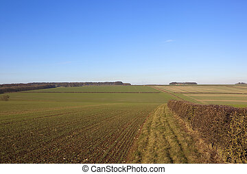 yorkshire wolds crops - extensive wheat crops in undulating...