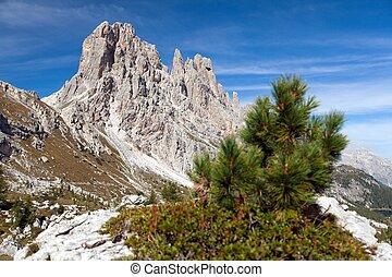 Small pine tree and Cima Ambrizola and Clroda da Lago -...