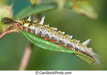 pest insect butterfly caterpillar bug