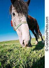 Close Up Of Funny Portrait On Wide Angle Lens Of Horse On Blue Sky Background