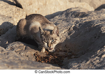 Homeless cat on the beach eating food