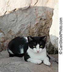 Cat on the beach - Homeless cat on the beach