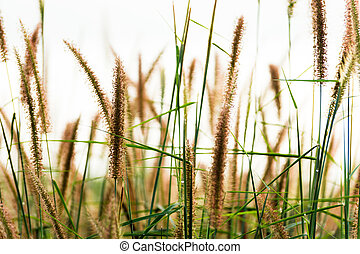 Flower grass in the forest.