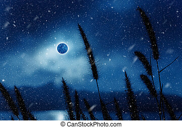 Silhouettes of flower grass in the moonrise. - Silhouettes...