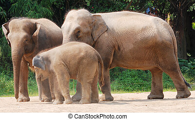 wild animal elephant family