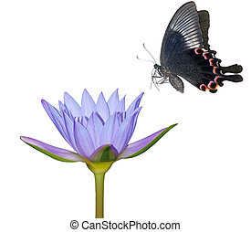 butterfly flower nature background isolated in white