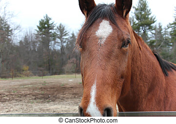 brown horse with white star on forehead in a field with...