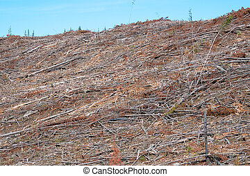 A clear cut forest on a mountain side with only debris left...