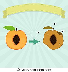 Rotten peach with flies and fresh peach. Blank ribbon for...