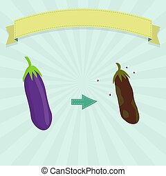 Rotten eggplant with flies and fresh eggplant. Blank ribbon...