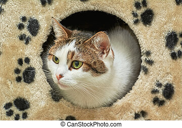 The Domestic Cat Looking out of its House