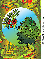 Rowan tree. - Rowan tree and its branch in the oval. Vector...