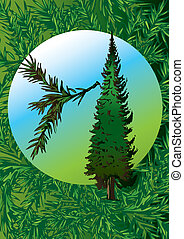 Pine tree - Pine tree and its branch in the oval Vector...