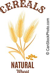 Wheat ear cereals vector isolated icon - Cereals icon....
