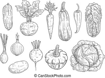 Vegetables sketch vector isolated icons - Veggies and...