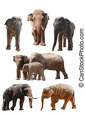 elephant set isolated - elephant set collection isolated on...
