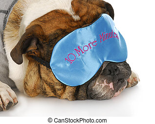 sleepy dog - english bulldog wearing sleep mask that says -...