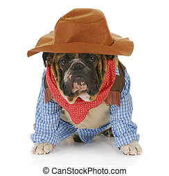 dog dressed up like a cowboy - english bulldog wearing...