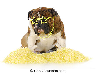 cheerful dog - english bulldog with yellow pompoms and star...