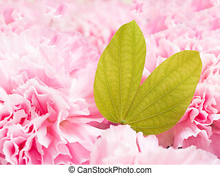 Pink petal flowers in soft style background with heart shape of green leaf.