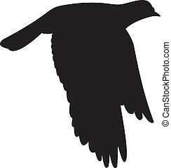 Dove vector - Bird vector.