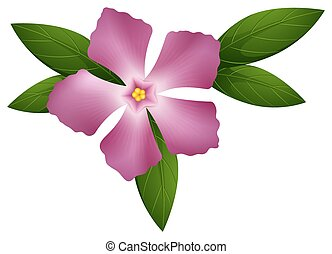 Periwinkle flower in pink color illustration