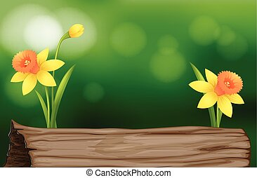 Daffodil flowers and log illustration