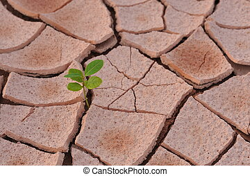 grows plant - On the arid land grows plant