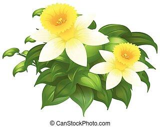 Daffodil flowers in bush illustration