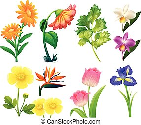 Different types of wild flowers illustration
