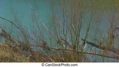 Tree Growing near river. autumn landscape - Tree Growing...
