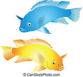 Cichlidae vector - Illustration of a colorful tropical fish...