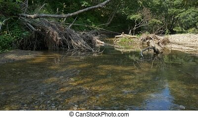 Forest river stock footage - Beautiful river in a deep...