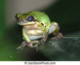 green frog on tree