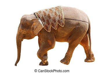 荒野, 動物, 大象