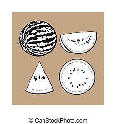 Whole, half, quarter and slice of ripe watermelon, sketch...