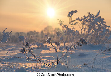 winter sunrise in the field, natural background